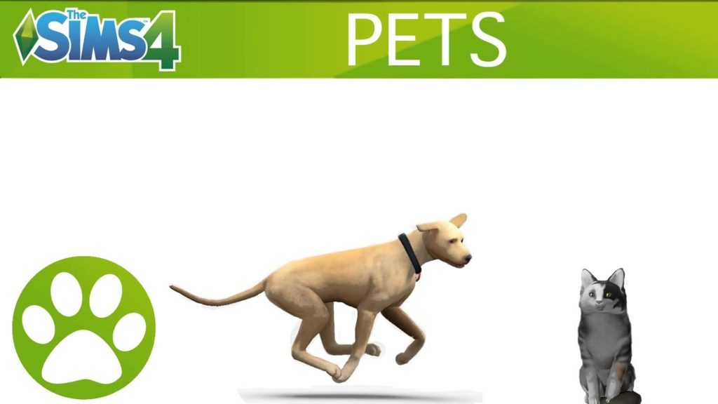 What Time Does Sims  Cats And Dogs Come Out
